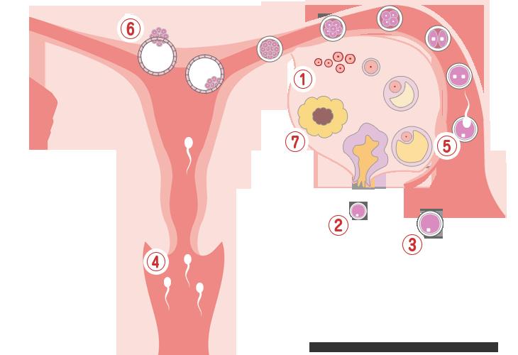 生挿入 妊娠